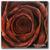 :icona-black-rose: