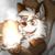:icona-kitsune700: