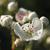 :icona-myriad-butterflies: