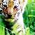 :icona-tiger: