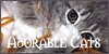 :iconadorablecats: