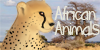 :iconafrican-animals: