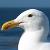 :iconaidan-gull: