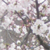 :iconainoketsueki: