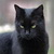 :iconalex-the-black-cat: