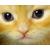 :iconalexey-the-cat: