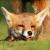 :iconalexwolf2012: