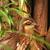 :iconallaboutbirds: