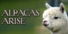 :iconalpacas-arise: