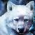 :iconalsekwolfdog: