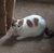 :iconalyssa-the-cat: