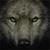 :iconamaniwolf: