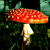 :iconamynitamuscaria: