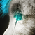 :iconanarwolfie: