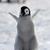:iconangel-the-penguin: