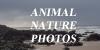 :iconanimal-nature-photos: