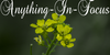 :iconanything-in-focus: