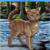 :iconappletailriverclan: