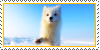 :iconarctic-foxes: