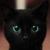 :iconaskwarriorcats11: