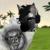 :iconathenwolf: