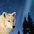 :iconaurorawolf: