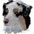 :iconaustralianshepkennel: