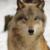 :iconazureeyedwolf: