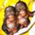 :iconbabii-munkii:
