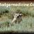 :iconbadgermedicine-again: