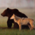 :iconbearwolf22: