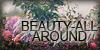 :iconbeauty-all-around: