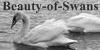 :iconbeauty-of-swans: