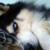 :iconbelladarkwolf: