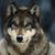 :iconbenlonewolf93: