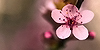 :iconbest-floral-photos: