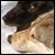 :iconbewarethewolf: