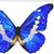 :iconbflydesigns: