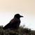 :iconbird-of-light: