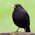 :iconbird007: