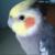:iconbirdsaregood: