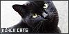 :iconblack-cat-love: