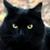 :iconblack-cats-wisdom: