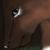 :iconblack-raven-eyes: