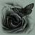 :iconblack-rose-immortal: