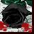 :iconblack-rose-stock: