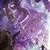 :iconblackhorse-infernox1: