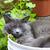 :iconblackokatt: