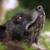 :iconblackwolf-kuzoku: