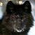 :iconblackwolf2000: